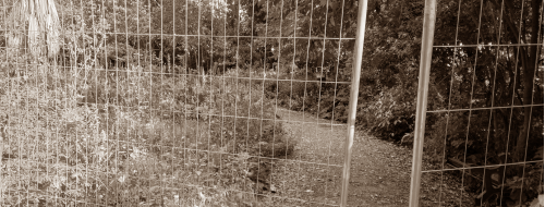 Villa Floridiana negata: cosa si nasconde dietro quel cancello? [FOTO]